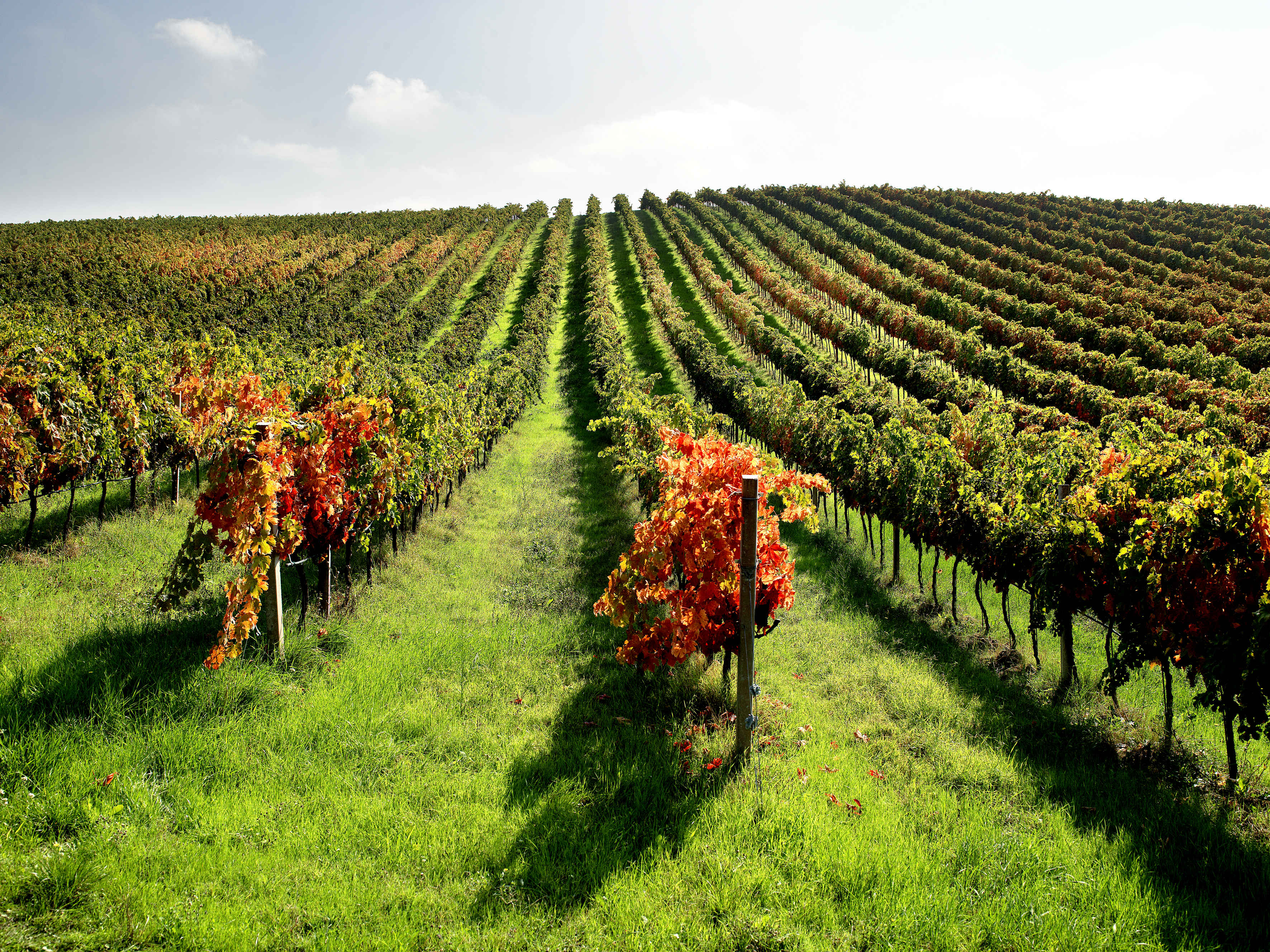 Q&A: Italian winemakers from the Gambero Rosso Wine Roadshow