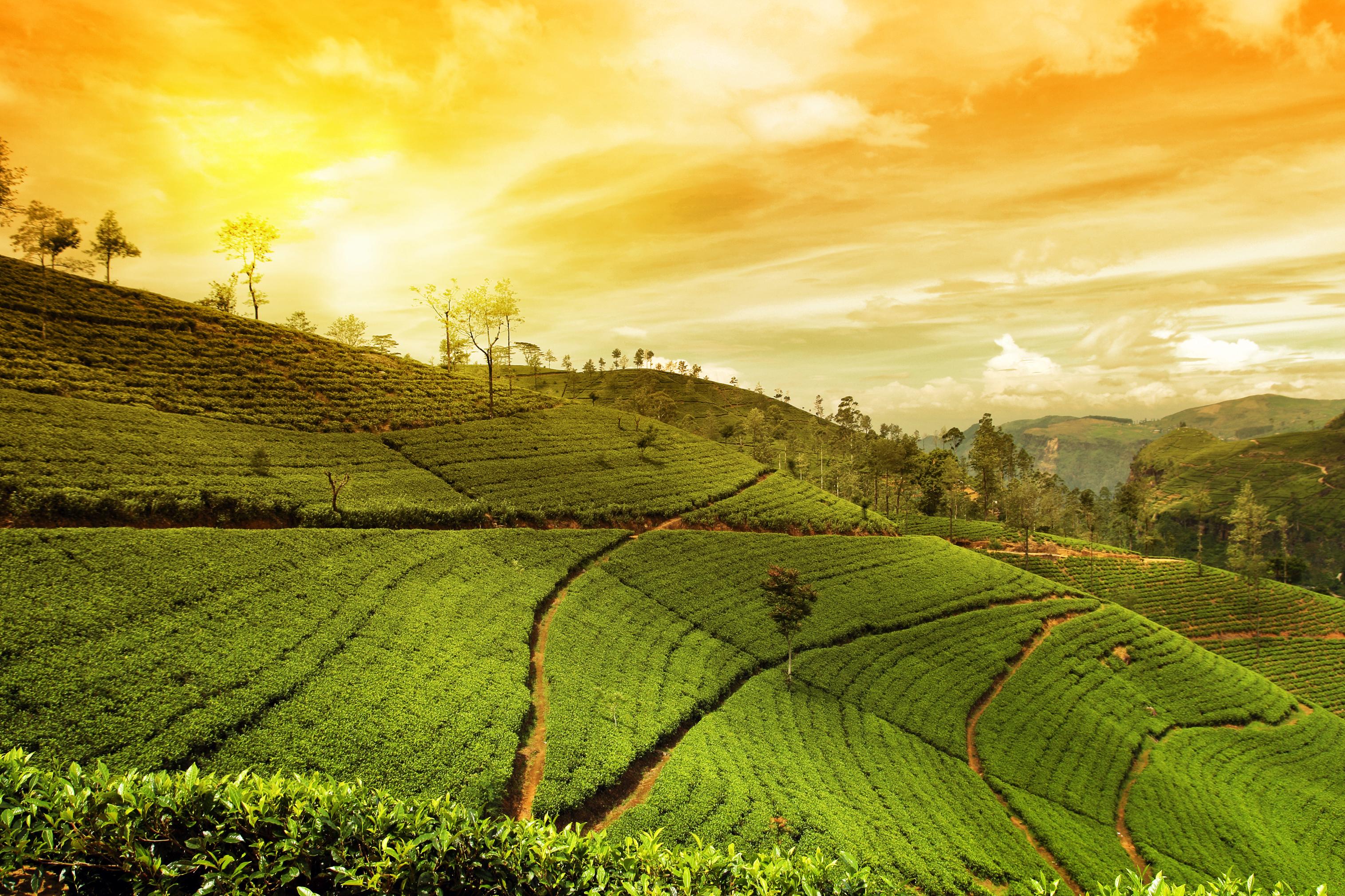 Hill Country, Sri Lanka