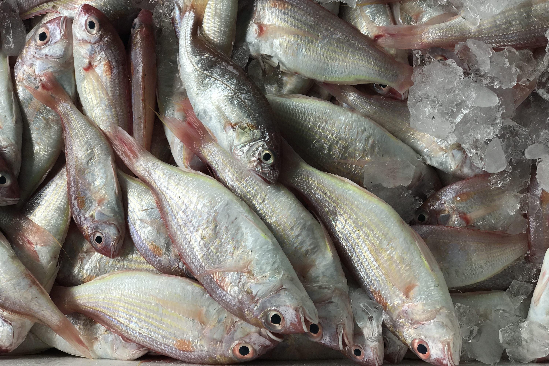 WWF Sustainable Seafood Week
