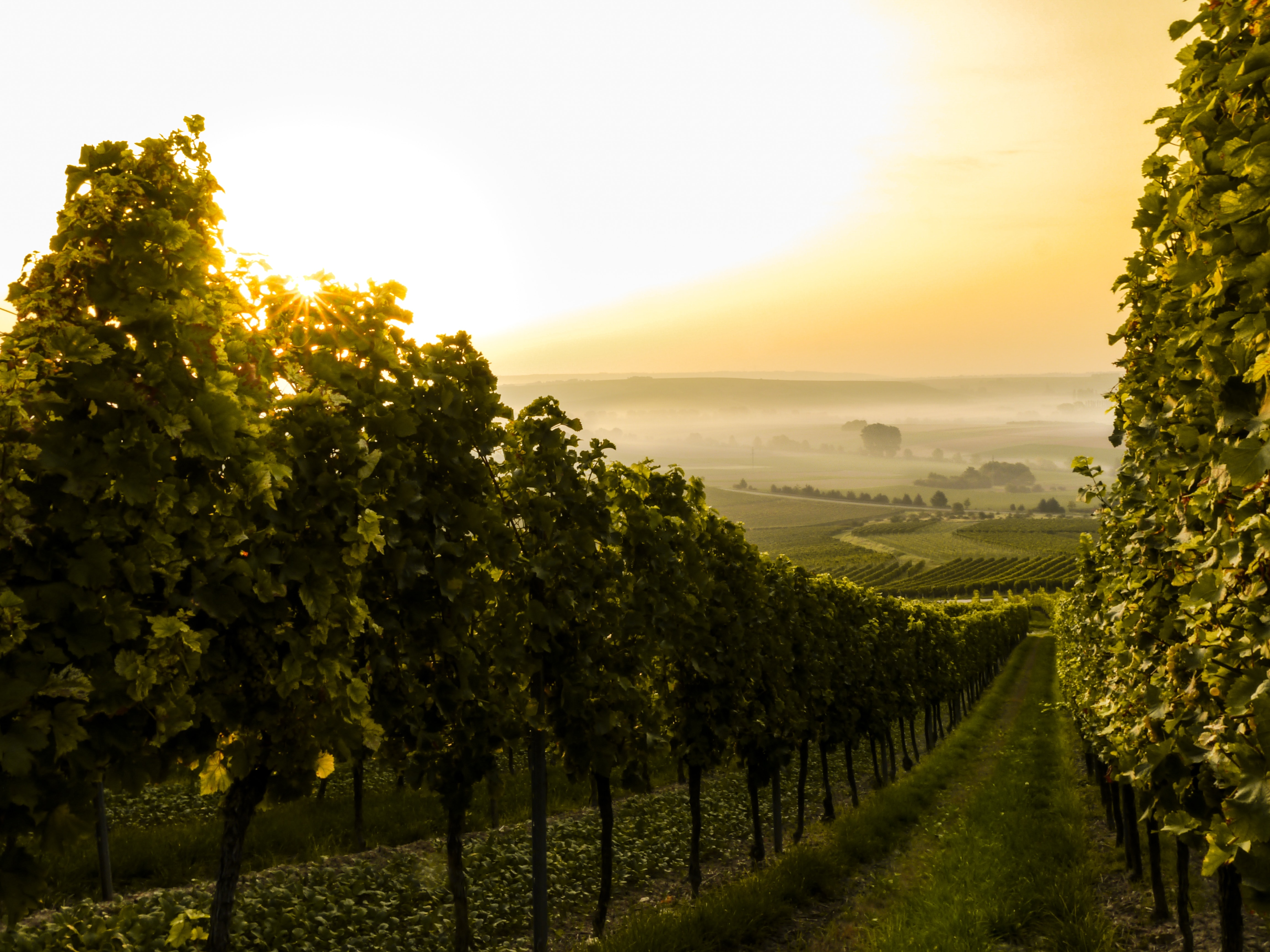 Your introductory guide to Hungarian wines and its varietals