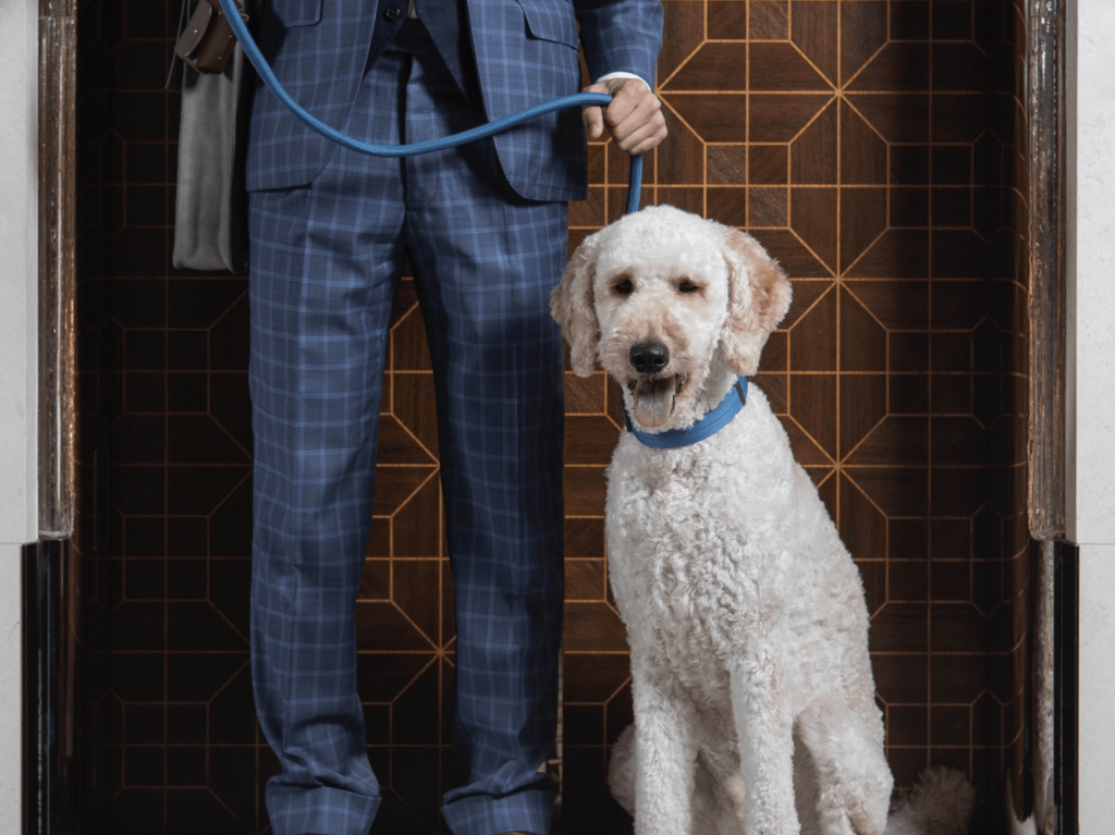 Pet-friendly staycations rosewood hotel