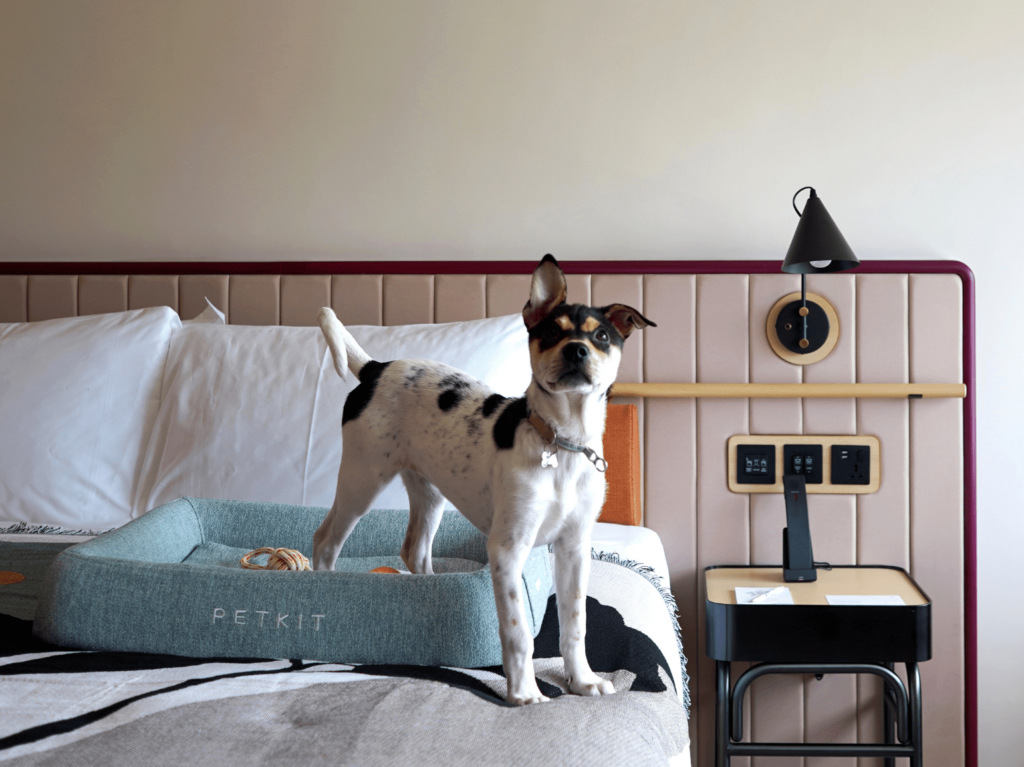 the arca pet friendly staycation