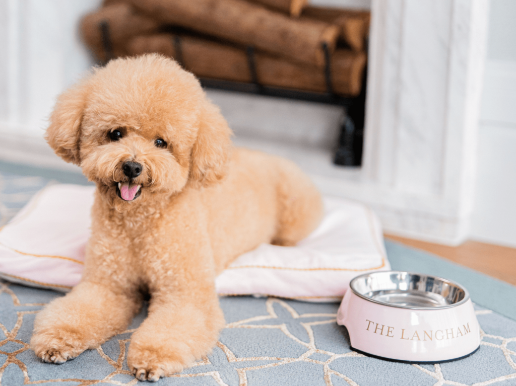 the langham pet friendly staycation