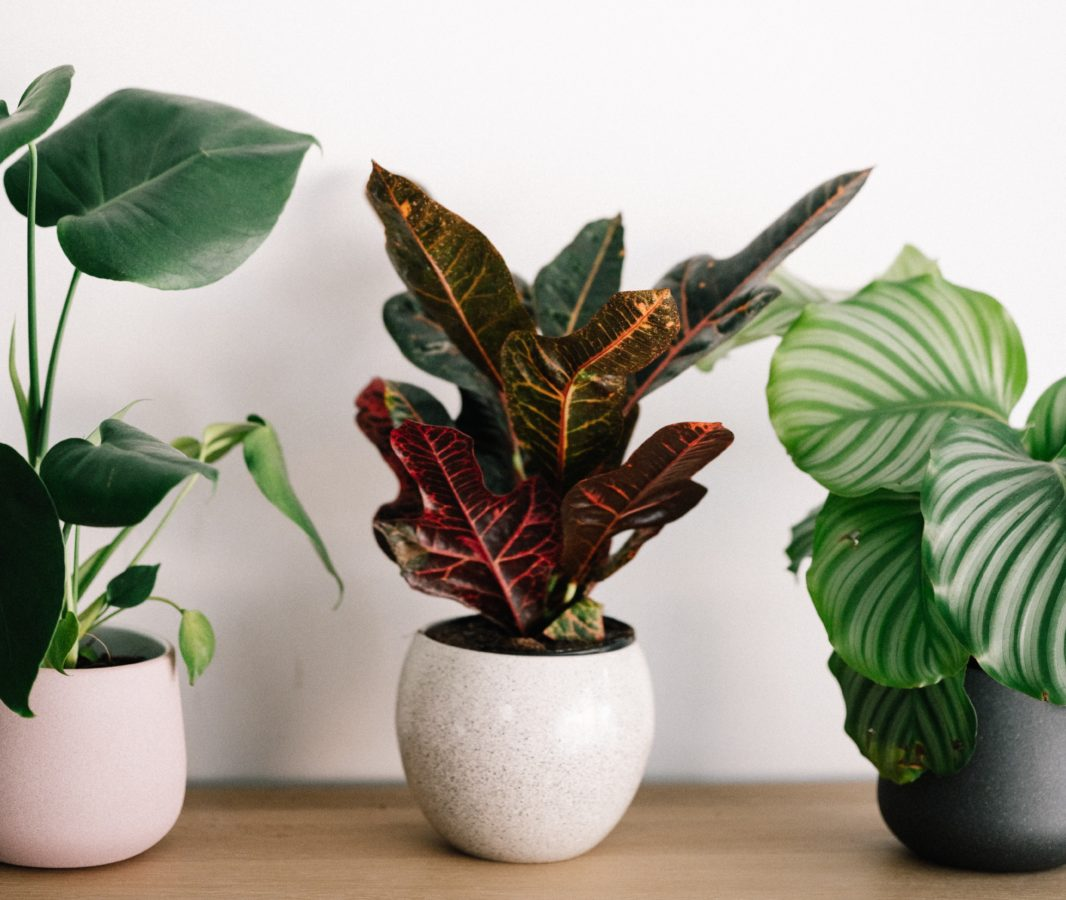 The house plant you should get, according to your zodiac sign