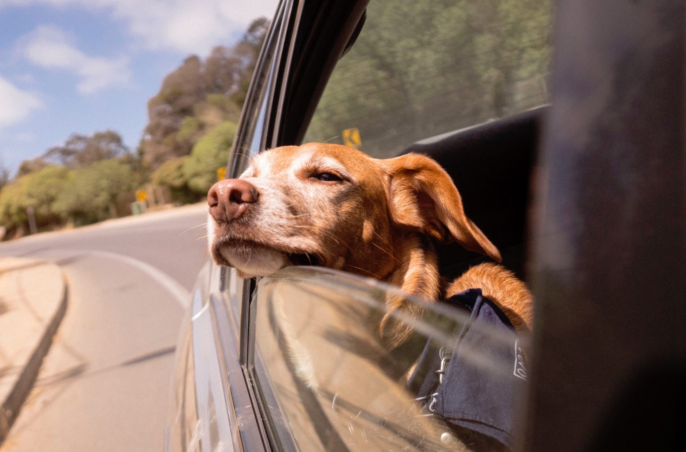 9 things to consider before going on a vacation with your pet