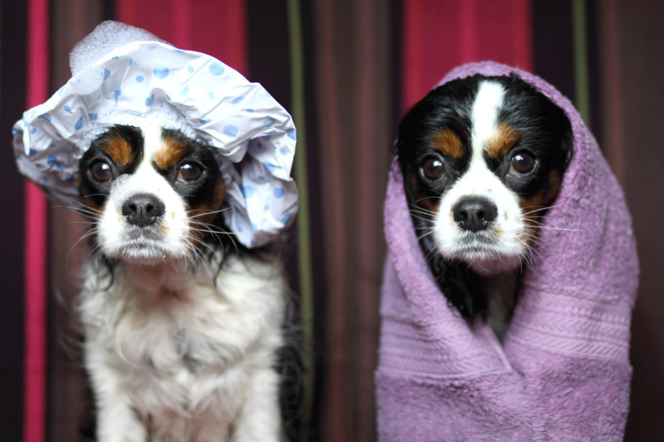 Pet grooming services in your city that will pamper your pets silly